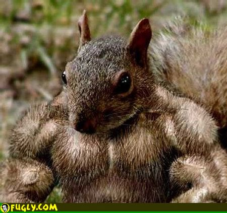 rippedsquirrel.jpg